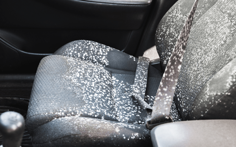 How To Remove Mold From Car Interior