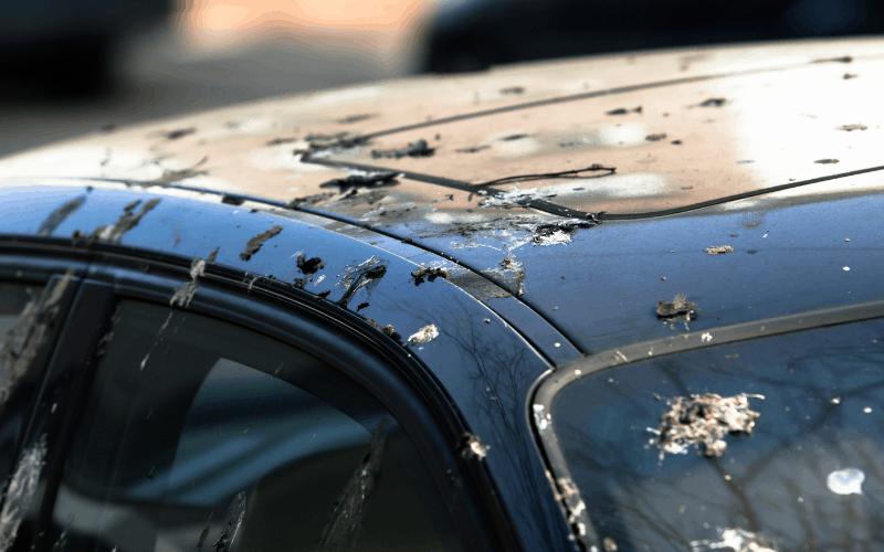bird droppings on car paint