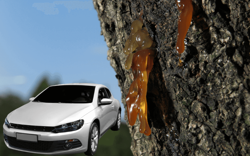 What ruins car paint instantly
